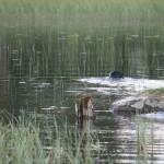 Flatshow jakt 2013 080
