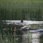 Flatshow jakt 2013 082