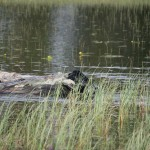 Flatshow jakt 2013 094