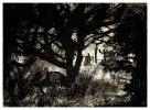 Träd sent på kvällen. Kol på papper, Ca A4.
