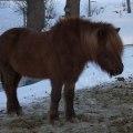 vinterhage_soley