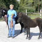 Bästa häst - stofölet Þerna från Fröö e. Divar från Lindnäs u Saga från Elelund