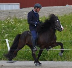 Seidur från Gröna Gången fick en fin bedömning på Avelschampionatet på SM. Han fick 8,19 för exteriör, 8,52 för ridegenskaper och 8,39 totalt.