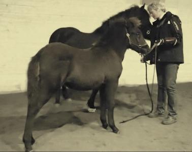 Bästa häst blev Hrafnfaxa från Kövra SE2014206115,         poäng: 77,41 Far: Kastali från Västeråsen Mor: Polýanna frá Leirulæk Uppfödare och ägare: Ann-Sofie Lilja