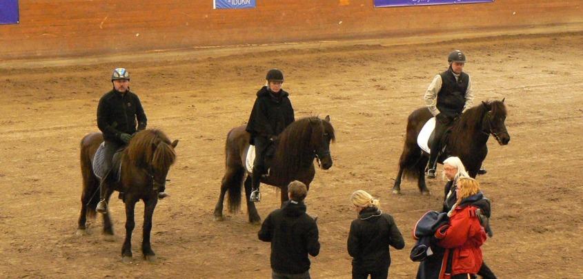 De tre första Hederspremierade hästarna i Sverige, Askur från Håkansgården, Mökkur frá Varmalaek och Von från Vindheimum.