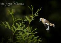 En flygande nötknäppare!
