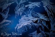 IceAge XXV