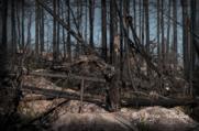 I eldens spår 13