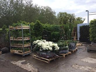 Drygt 1000 plantor för plantering av woodland