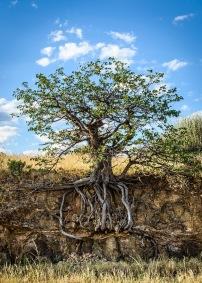 Träd - Träd 30x40cm Fine Art Poster