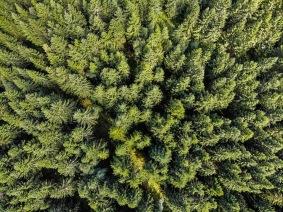 Mösseberg skog - Mösseberg skog 30x40cm Fine Art Poster