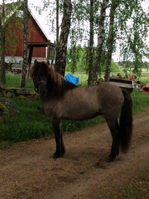 Obs! Hästen på bilden har inget med inlägget att göra!