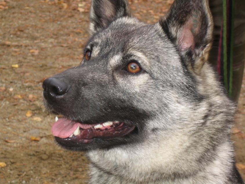 ABBA, Gerhards hund tycker om älgjakt