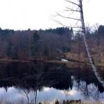 skogsgläntan 1