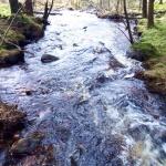 Skogsgläntan 2