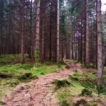 skogsgläntan 4