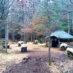 skogsgläntan 5