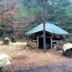 skogsgläntan 7