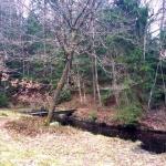 skogsgläntan 9