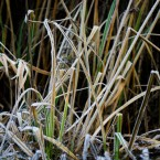 20091203_frost_0232