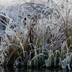 20091203_frost_0663