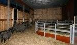 Så här ser det ut i fårhuset nu! Klicka på bilden för att se den i större format!
