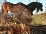 Åh så skönt att tappa den varma ulliga vinterpälsen! Hästarna blir pigga och småfåglarna blir glada! Klicka på bilden för att se den i större format!