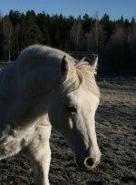 Bokhaga Iris vår vintergäst!