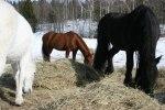 Hästarna myser i vårsolen! Klicka på bilden för att se den i större format!