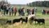 Alla hade kamerorna i högsta hugg och fokus på djuren när dörren till fårhuset öppnades. Klicka på bilden för att se den i större format!