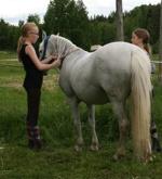 Wilma och Frida badar Iris. Ponnyn Iris är tålig och verkar njuta av behandlingen. De är duktiga hästtjejer som pysslar om hästarna!