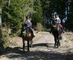 Påskhästarna på väg ut i skogen!  Klicka på bilden för större format.