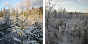 Snö, sol och kallt på promenaden!