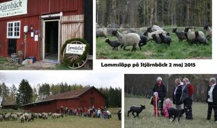 Lammstallet var iordningställt för konstutställning, lyckliga lamm och tackor skuttade ut på ängen och folk gladdes åt stunden!
