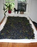 Bordet fullt med blåbär efter en sväng till skogen! Klicka på bilden för att se den i större format.