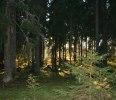 solnedgång i skogen
