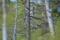 Slaguggleunge, Galven, Hälsingland