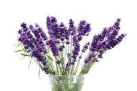 Lavendel - en rogivande doft som är bra för att lugna ned sig
