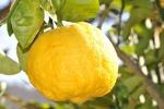 Citron kan användas till mycket mer än att äta.