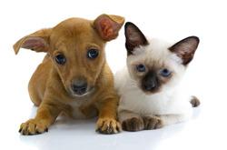 SHAKE dammsugardoft hjälper husdjursägare att hålla rent och fräscht