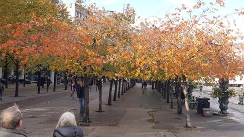 Höstliga körbärsträd