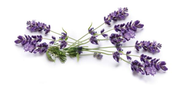 Med doften av Lavendel i sovrummet slappnar du av lättare