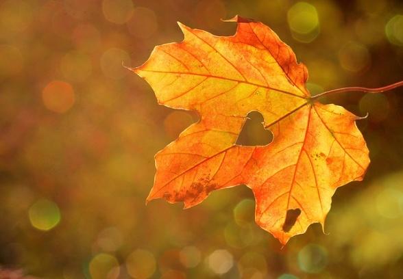Älskar du hösten?