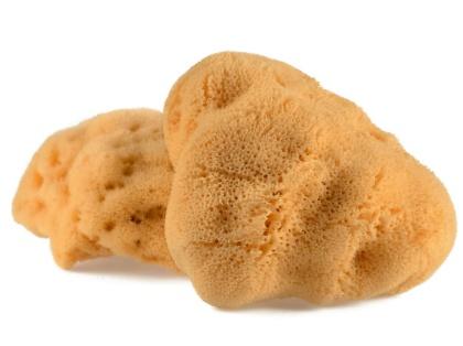 Naturlig havssvamp som kan användas bl.a. som duschsvamp, svamptampong, smink remover...