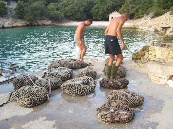 Nya havssvampar har levererats