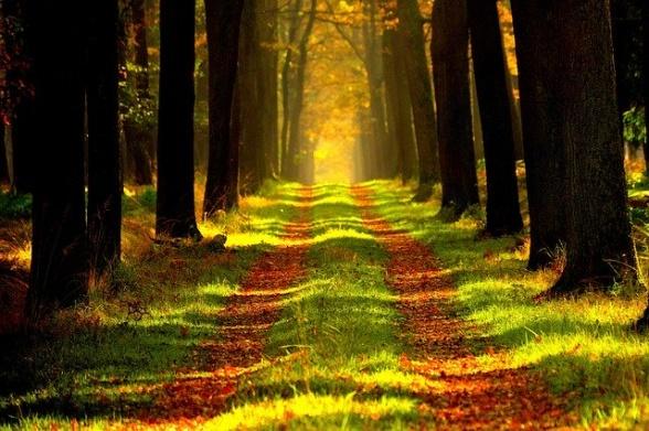 Hösten är på väg(en)