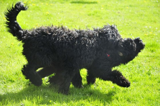 Charley and Teddie playing
