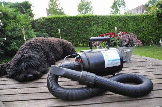 The water blower - a must for Barbet owners