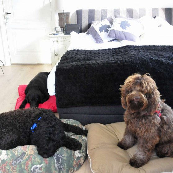 First night - dogs took more space then we in that little room - each one on their own dog bed!