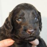 Brown-angel-boy-3-weeks
